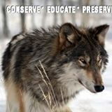 Colorado Wolf & Wildlife Center located in Florissant CO
